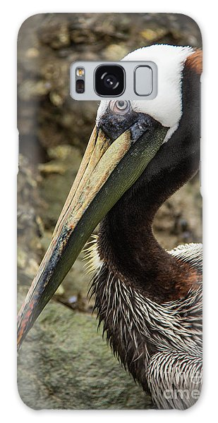 Mr. Cool Wildlife Art By Kaylyn Franks Galaxy Case