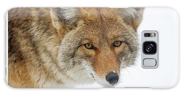 Mr. Coyote Galaxy Case