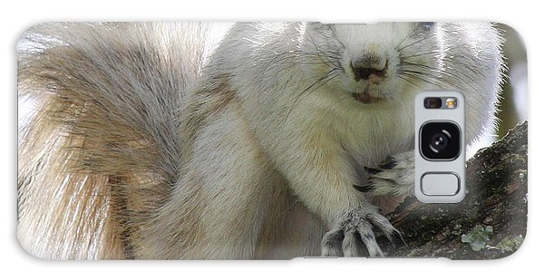 Mr. Inquisitive II Galaxy Case by Betsy Knapp