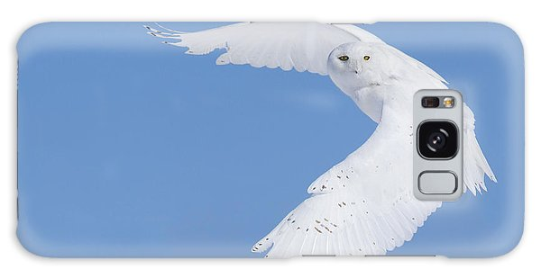 Mr Snowy Owl Galaxy Case by Mircea Costina Photography