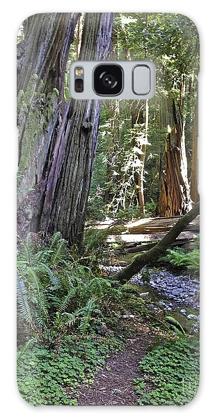 Muir Woods Beauty Galaxy Case