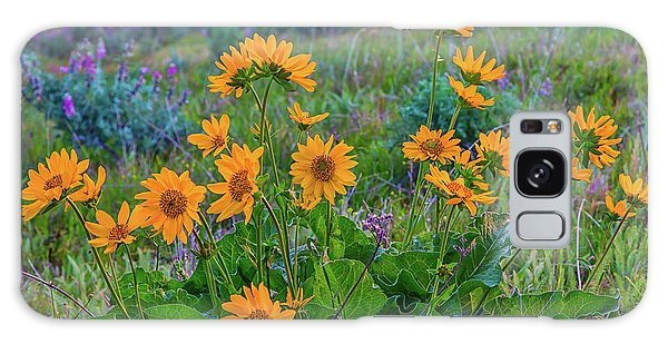 Mule's Ear And Lupine Galaxy Case