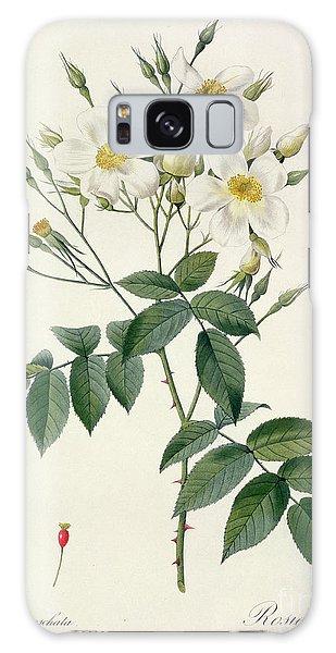 Plants Galaxy Case - Musk Rose by Pierre Joseph Redoute