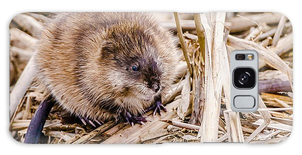 Galaxy Case featuring the photograph Muskrat Ball by Steven Santamour