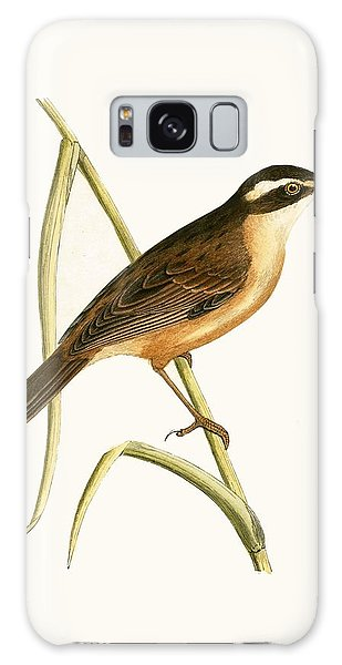 Song Bird Galaxy Case - Mustached Warbler by English School