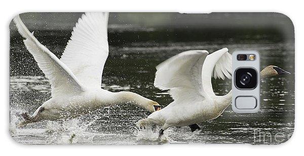 Mute Swan Intimidation Galaxy Case
