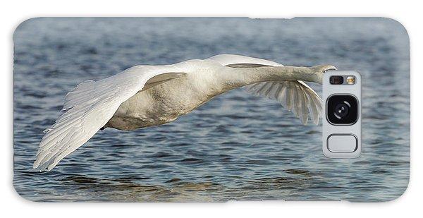 Mute Swan Galaxy Case by Roy McPeak