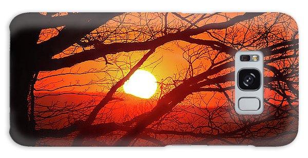 Naked Tree At Sunset, Smith Mountain Lake, Va. Galaxy Case