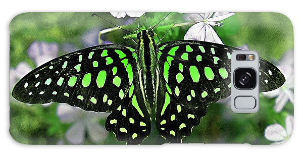 Neon --- Tailed Jay Butterfly Galaxy Case