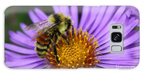 New England Aster And Bee Galaxy Case by Steve Augustin
