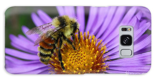 New England Aster And Bee Galaxy Case
