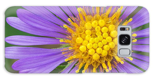 New England Aster Galaxy Case