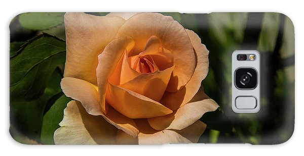 New Rose Galaxy Case