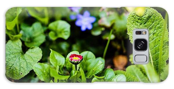 New Season For Bellis Perennis Bellissima Red Galaxy Case