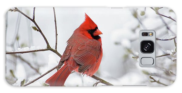 Northern Cardinal - D001540 Galaxy Case