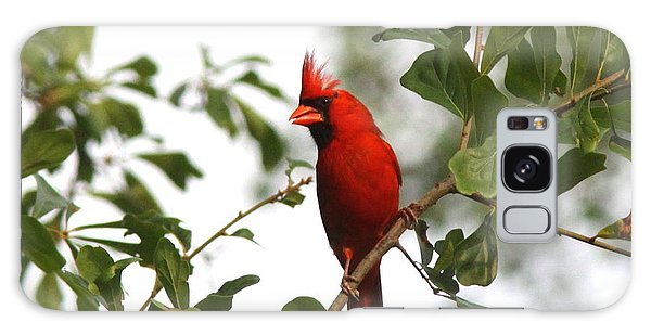 Northern Cardinal - In The Wind Galaxy Case