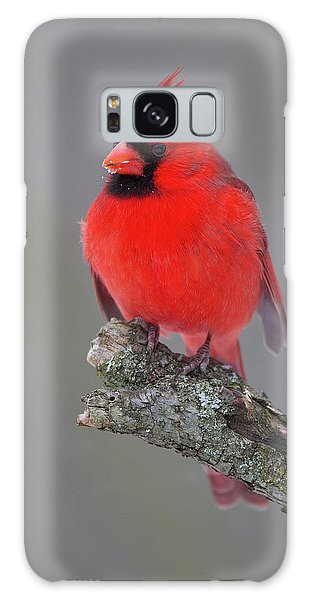 Northern Cardinal 10 Galaxy Case