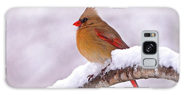 Northern Cardinal In Winter Galaxy Case