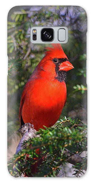 Galaxy Case featuring the photograph Northern Cardinal by Ken Stampfer