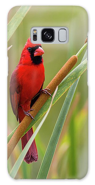 Northern Cardinal On Cattail Galaxy Case