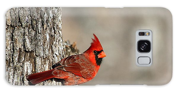 Northern Cardinal On Tree Galaxy Case