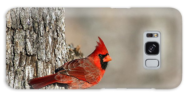 Northern Cardinal On Tree Galaxy Case