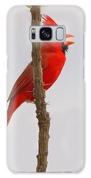 Northern Cardinal Proclaiming Spring Territory Galaxy Case