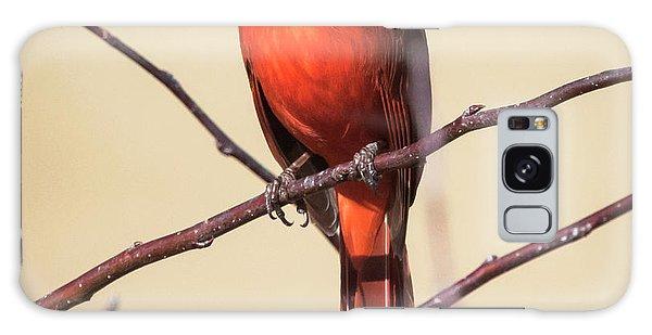 Northern Cardinal Profile Galaxy Case