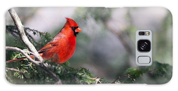Northern Cardinal Red Galaxy Case