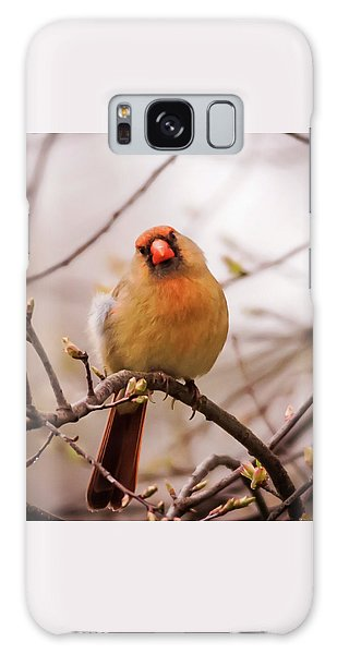 Northern Female Cardinal Pose Galaxy Case by Terry DeLuco