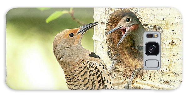 Northern Flicker Feeding Baby Galaxy Case