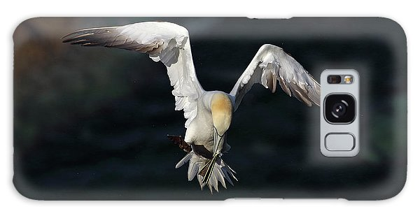 Galaxy Case featuring the photograph Northern Gannet In Flight 2 by Grant Glendinning