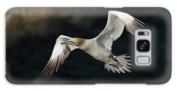 Galaxy Case featuring the photograph Northern Gannet In Flight by Grant Glendinning