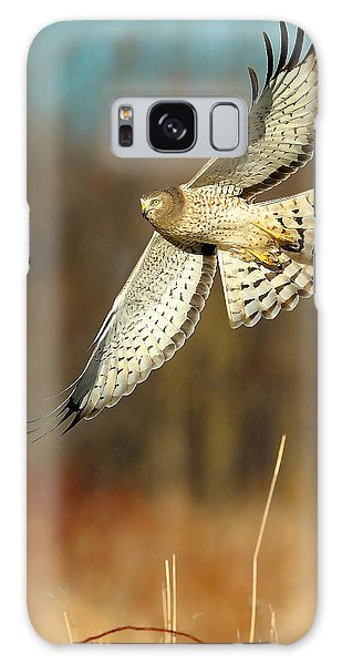 Northern Harrier Banking Galaxy Case