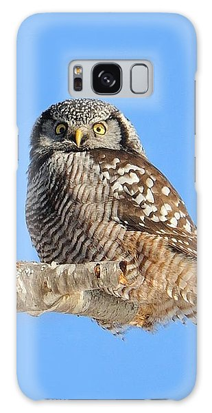 Galaxy Case featuring the photograph Northern Hawk-owl On Limb by Debbie Stahre