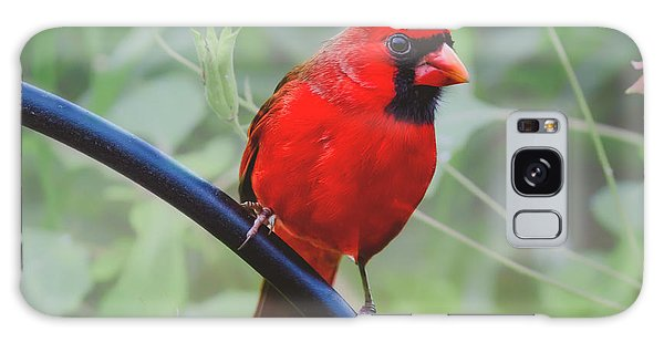Northern Male Red Cardinal Bird Galaxy Case