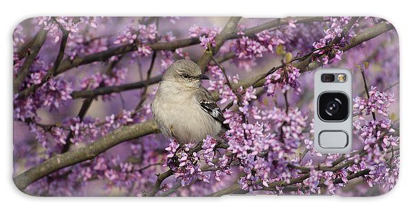 Northern Mockingbird In Blooming Redbud Tree Galaxy Case