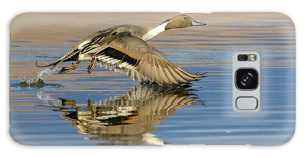 Northern Pintail With Reflection Galaxy Case