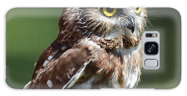 Northern Saw Whet Owl Galaxy Case