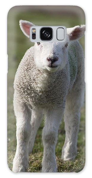 Sheep Galaxy S8 Case - Northumberland, England A White Lamb by John Short