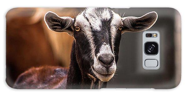 Nubian Goat In Barnyard Galaxy Case