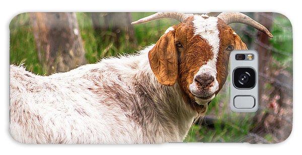 Nubian Goat Profile Sonoma County Galaxy Case
