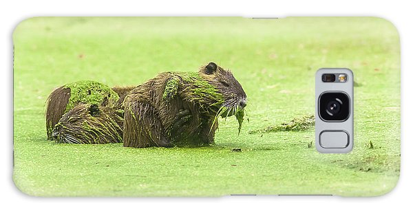 Nutria In A Pesto Sauce Galaxy Case by Robert Frederick