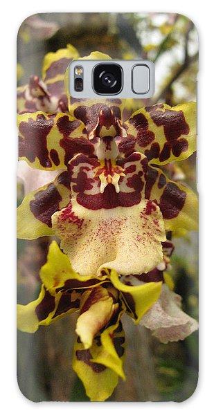 Odontoglossum Orchid Galaxy Case