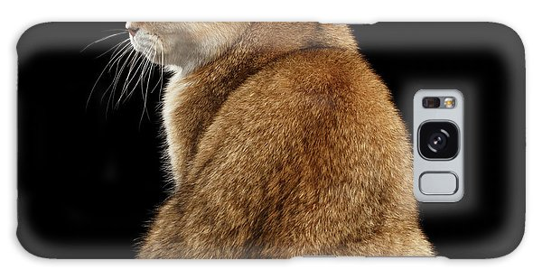 offended British cat Golden color Galaxy Case