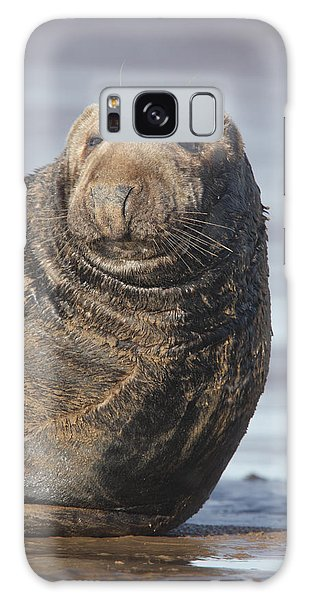 Old Atlantic Grey Seal On The Beach Galaxy Case