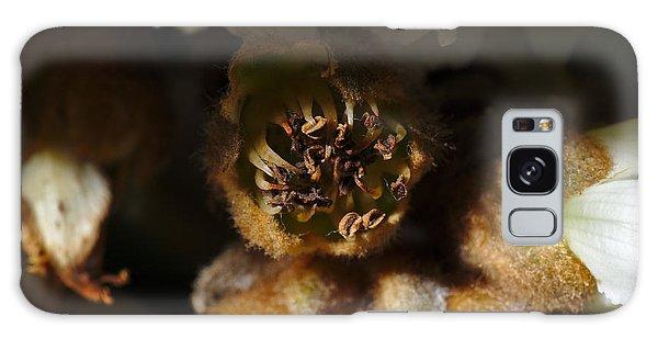 Old Loquat Tree Flower Galaxy Case by Angelo DeVal