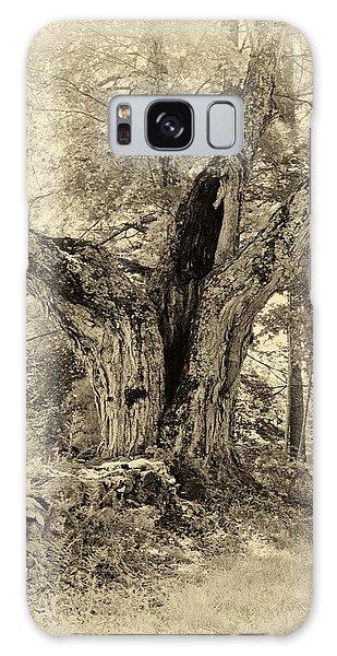 Old Tree  Galaxy Case