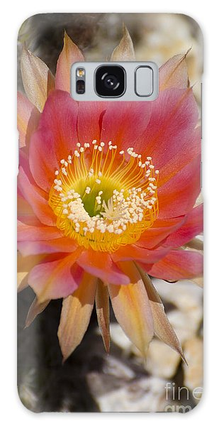 Orange Cactus Flower Galaxy Case