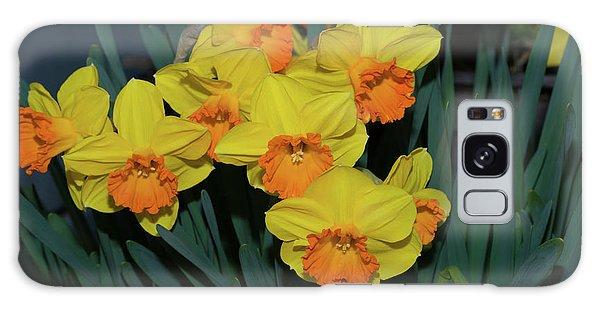 Orange-centered Daffodils Galaxy Case